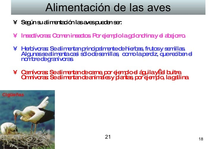 Alimentación de las aves <ul><li>Según su alimentación las aves pueden ser:  </li></ul><ul><li>Insectívoras: Comen insecto...