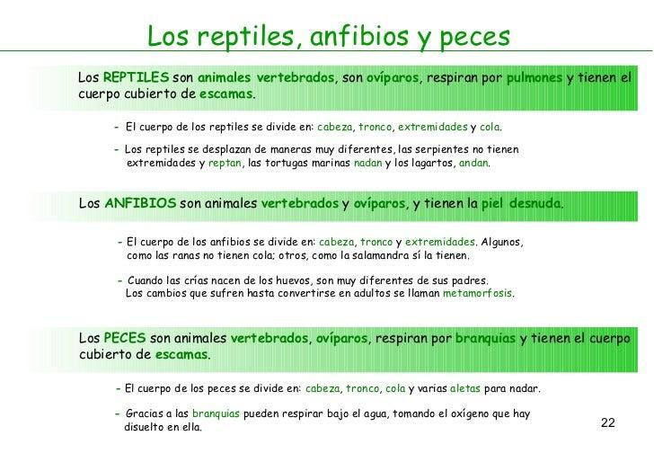 Los reptiles, anfibios y peces Los  REPTILES  son  animales vertebrados , son  ovíparos , respiran por  pulmones  y tienen...