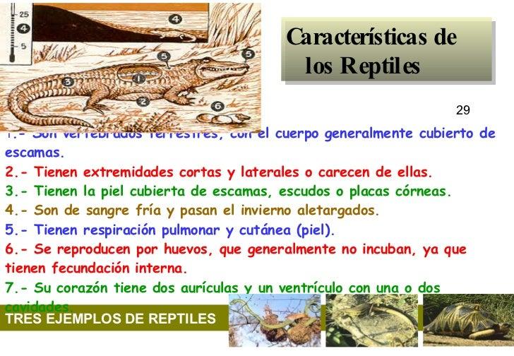 Características de los Reptiles 29                TRE...