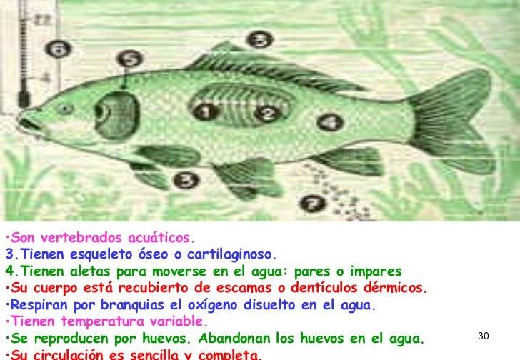<ul><li>Son vertebrados acuáticos.   </li></ul><ul><li>Tienen...