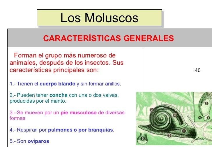 Los Moluscos 40      Forman el grupo más numeroso de animales...
