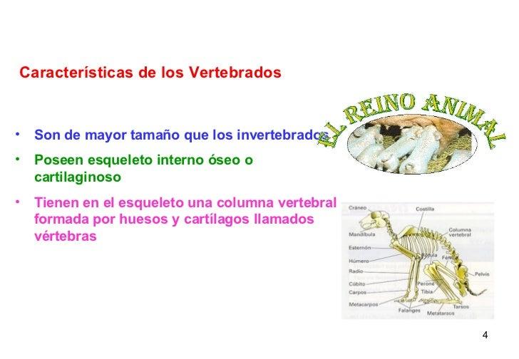<ul><li>Son de mayor tamaño que los invertebrados </li></ul><ul><li>Poseen esqueleto interno óseo o cartilaginoso </li></u...
