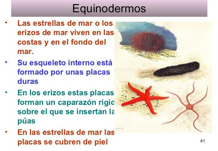 Equinodermos <ul><li>Las estrellas de mar o los erizos de mar viven en las costas y en el fondo del mar. </li></ul><ul><li...
