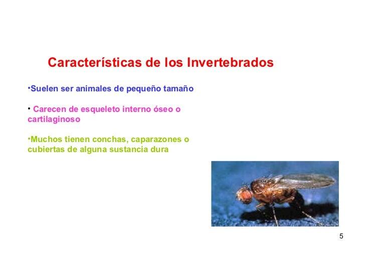 Características de los Invertebrados <ul><li>Suelen ser animales de pequeño tamaño </li></ul><ul><li>Carecen de esqueleto ...