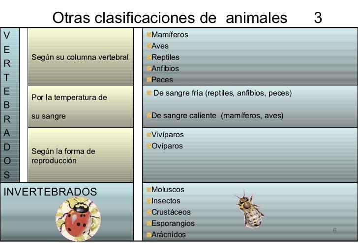 Otras clasificaciones de  animales  3  <ul><li>Moluscos </li></ul><ul><li>Insectos </li></ul><ul><li>Crustáceos </li></ul>...