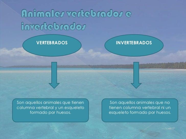 VERTEBRADOS                  INVERTEBRADOSSon aquellos animales que tienen    Son aquellos animales que nocolumna vertebra...