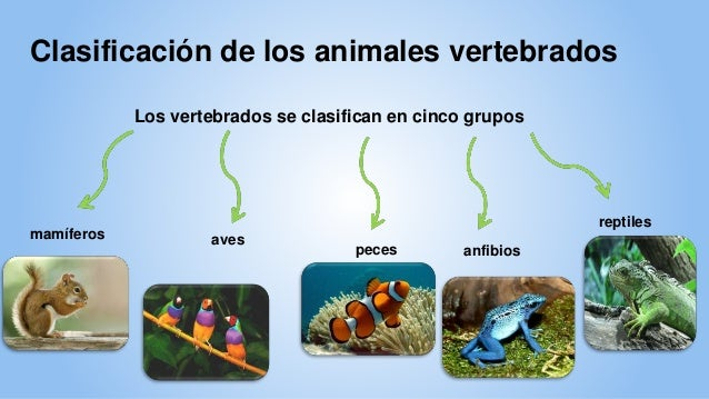 Animales vertebrados e invertebrados for Como se cultivan los peces