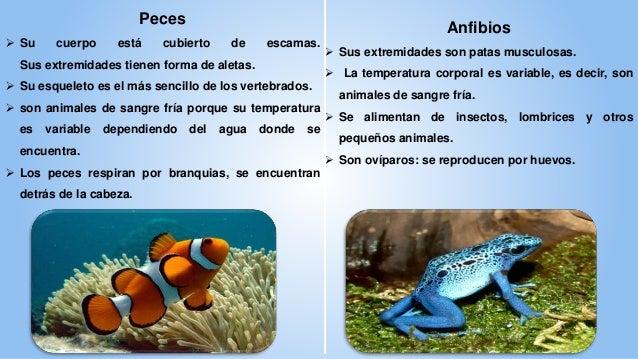 Animales vertebrados e invertebrados - Como se aparean los elefantes ...