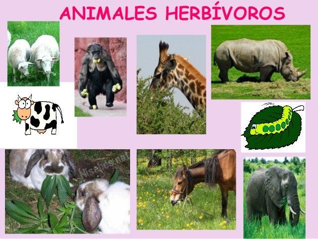 ANIMALES OMNÍVORAS