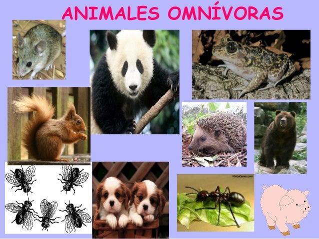 Animales vertebrados e invertebrados cristyna