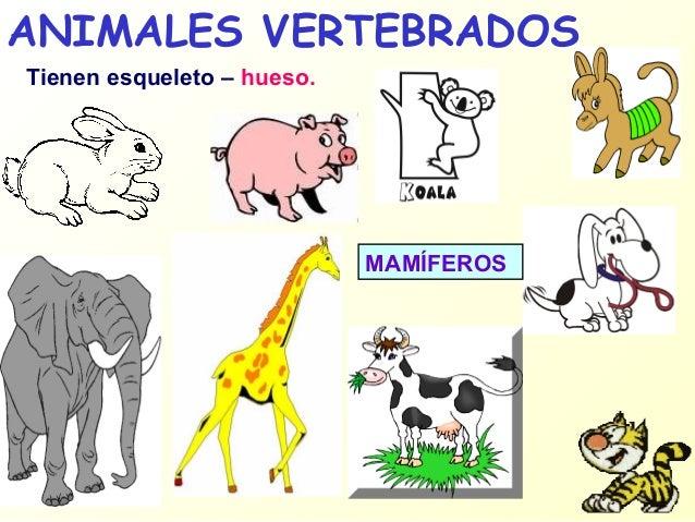 Animales invertebrados: ejemplos y caractersticas - con fotos 86