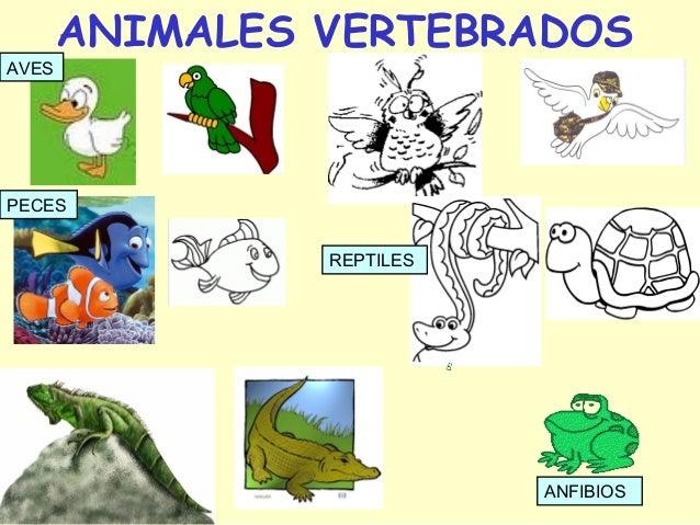 ANIMALES INVERTEBRADOSCRUSTÁCEOSMOLUSCOS     ANÉLIDOS