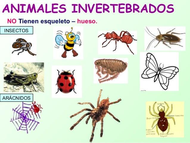 Resultado de imagen de animal invertebrado