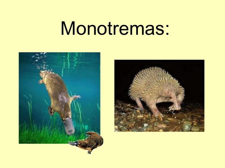 Animales vertebrados!eva pérez Slide 3