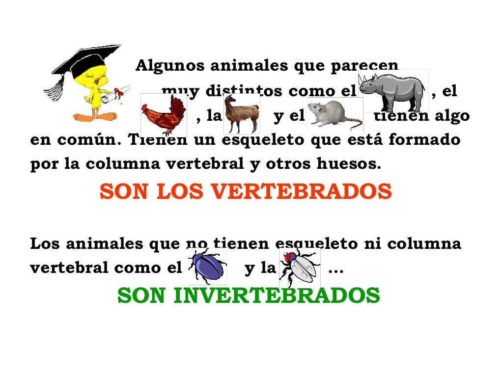 Animales vertebraos e invertebrados
