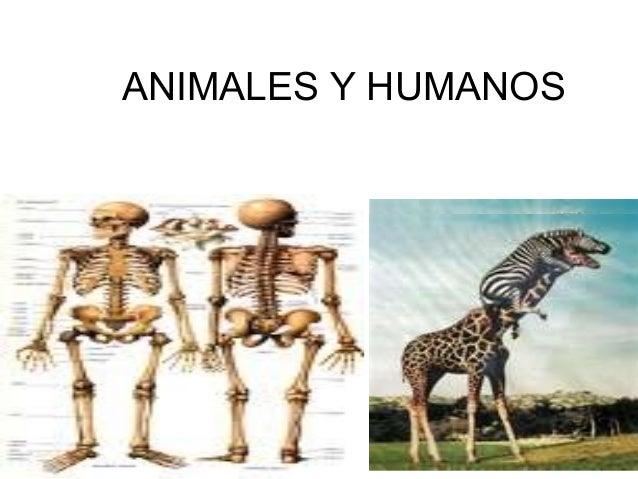 ANIMALES Y HUMANOS k