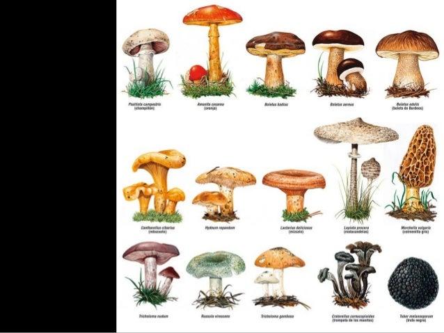 Conocer ciencia bacterias hongos y plantas biologia 2 - Tipos de hongos en la pared ...