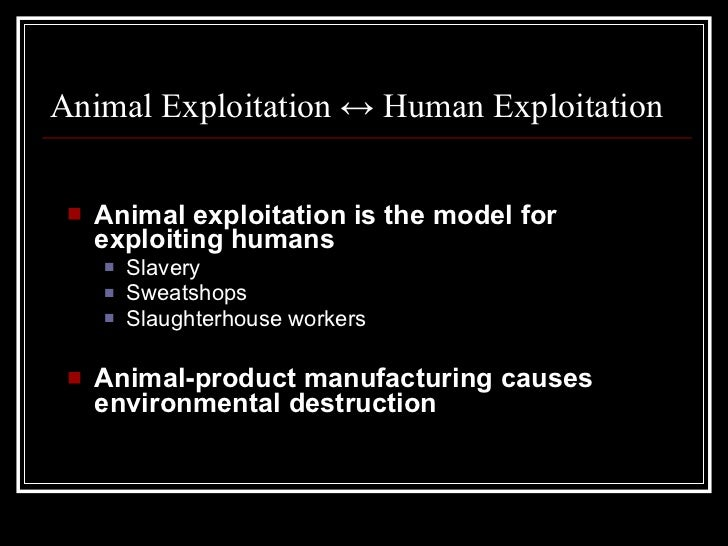 animal exploitation Press releases - from stop animal exploitation now - exposing the truth to wipe out animal experimentation.