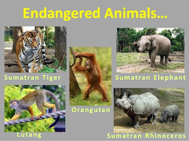 causes animal extinction Check out this text set to learn more about extinct species and what is being done  to save those that are endangered animal endangerment and its causes.