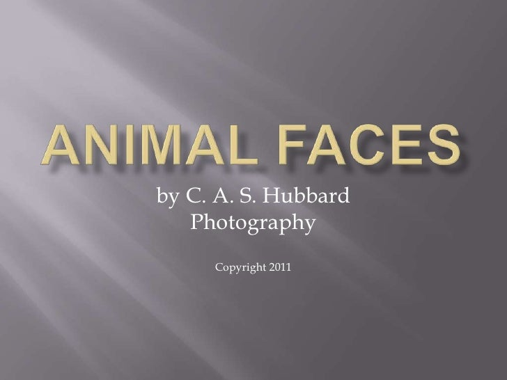 Animal Faces<br />by C. A. S. Hubbard<br />Photography<br />Copyright 2011<br />