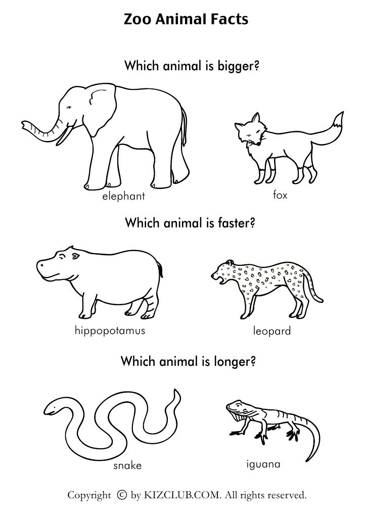 Zoo Animal Facts              Which animal is bigger?           elephant                           fox             Which a...