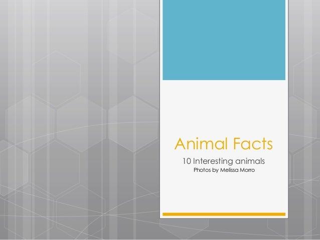 Animal Facts 10 Interesting animals Photos by Melissa Morro