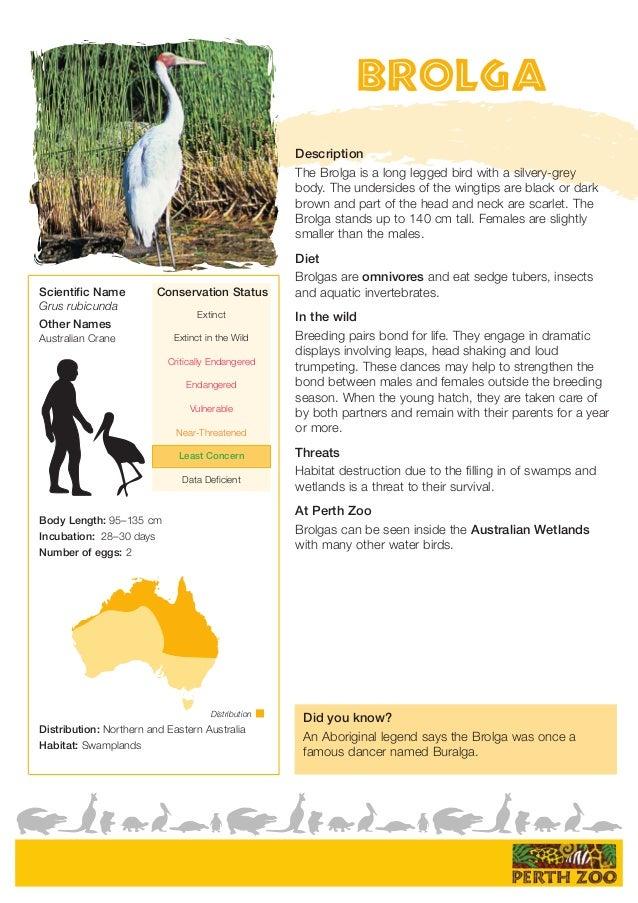 ... WESTERN AUSTRALIA; 2. Distribution Brolga ...