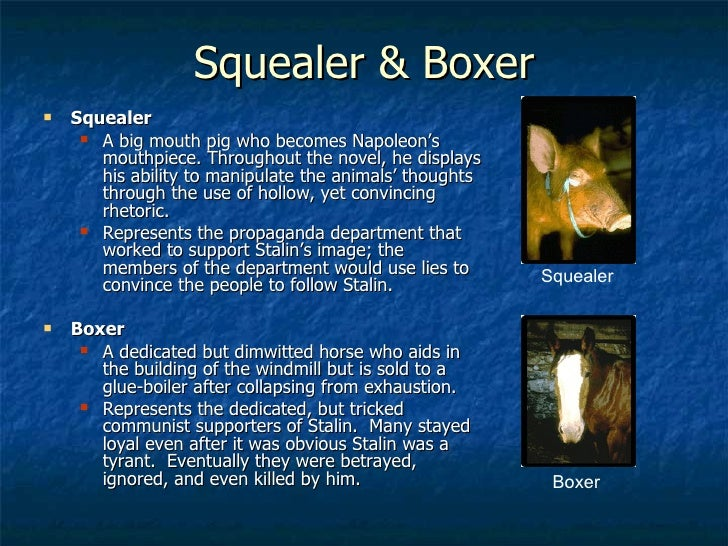 animal farm  26 squealer boxer