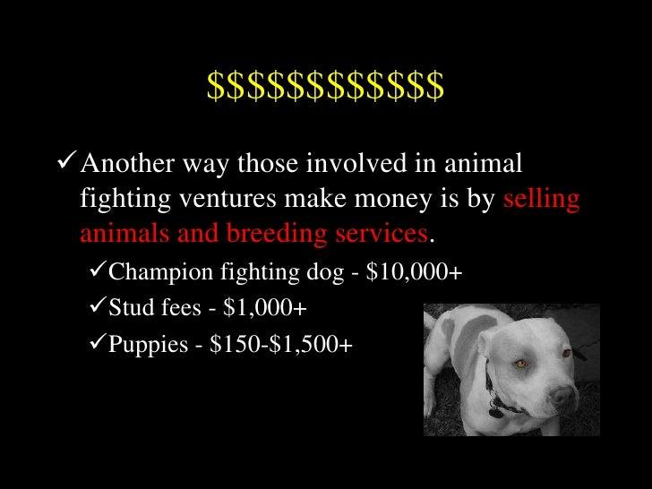 Animal Fighting Power Point 2011