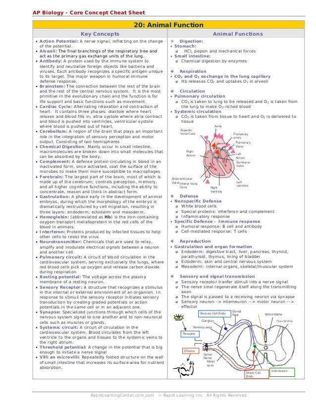 biology cheat sheet Biology cheat sheets bio topic 1: cell biology cheat sheet a cheat sheet for the first topic in gcse biology bullshit help 7 mar 18 biology, aqa, cells, gcse.