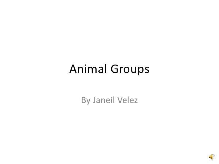 Animal Groups   By Janeil Velez