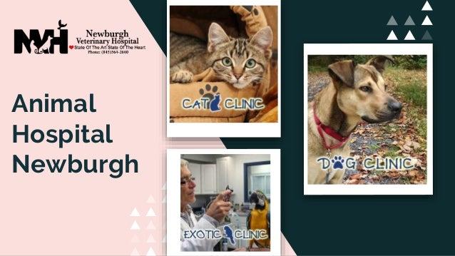 Animal Hospital Newburgh