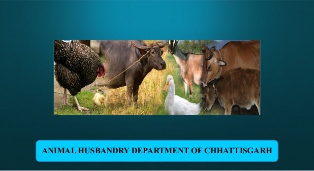 Animal husbandry 1