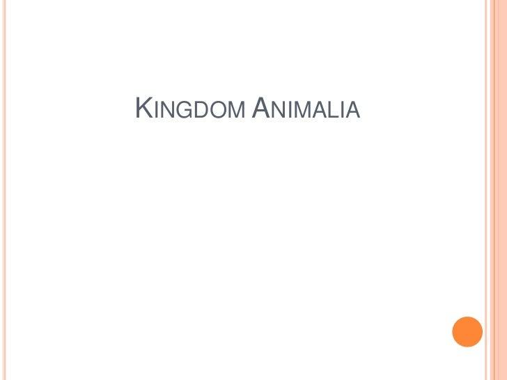 Kingdom Animalia<br />