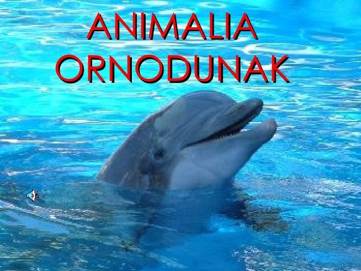 ANIMALIA ORNODUNAK