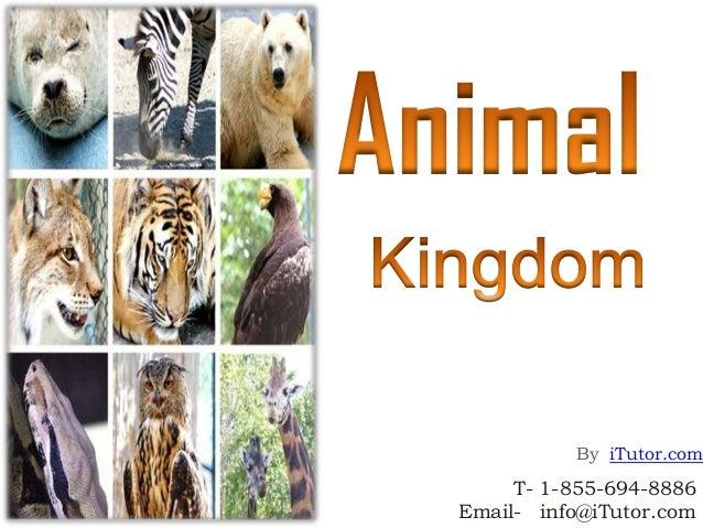 Image of: Phylum Az Animals Animal Kingdom
