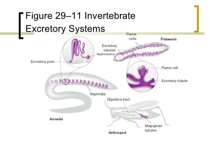 Animal Kingdom Comparative Anatomy