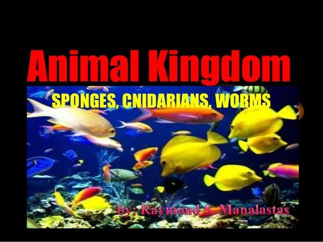 Animal Kingdom SPONGES, CNIDARIANS, WORMS