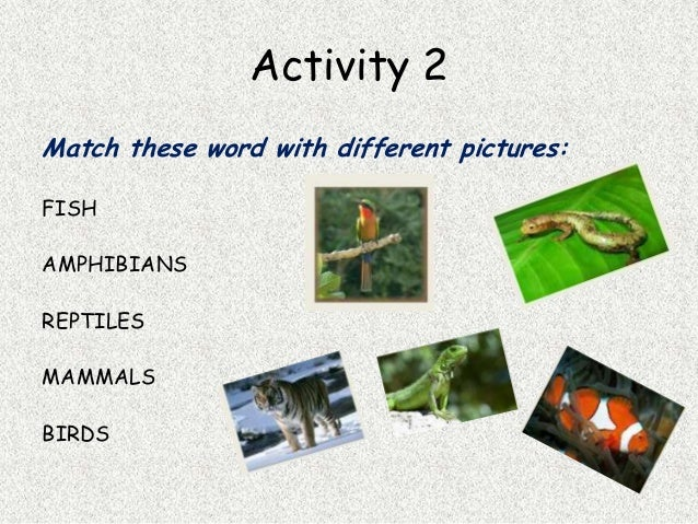 essay questions on vertebrates Read this essay on invertebrates and vertebrates come browse our large digital warehouse of free sample essays get the knowledge you need in order to pass your.