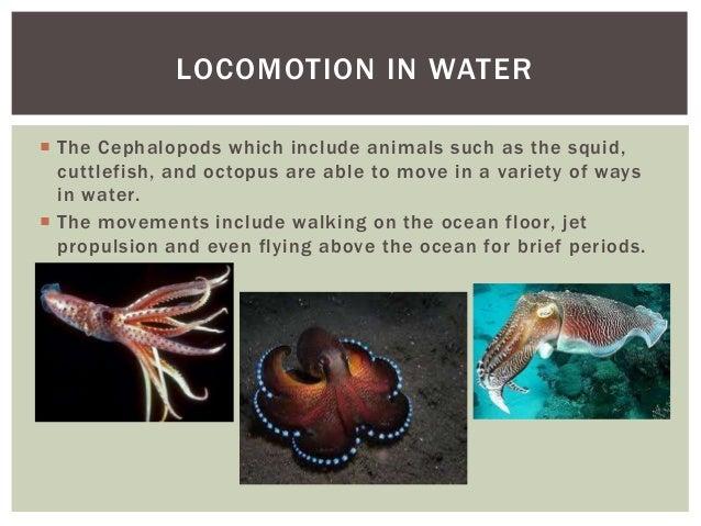 Animal Locomotion Presentation