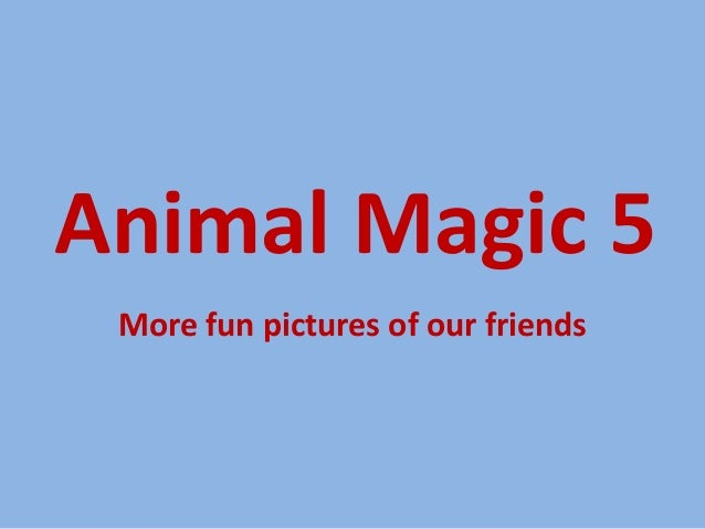 Animal Magic 5 More fun pictures of our friends