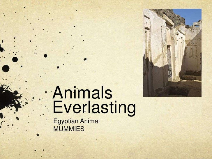 Animals Everlasting<br />Egyptian Animal<br />MUMMIES<br />