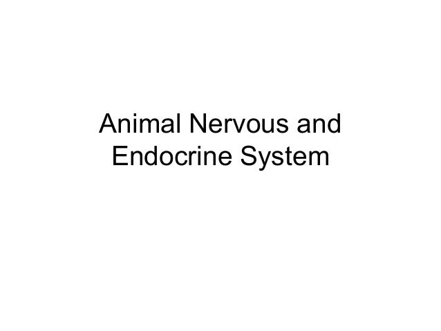 Animal Nervous and Endocrine System