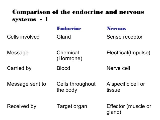 the differences of the endocrine and Your endocrine system works with your nervous system to control important bodily functions the endocrine systems responsibilities include regulating growth, sexual development and function, metabolism and mood the endocrine system also helps give your body the energy it needs to function properly endocrine.
