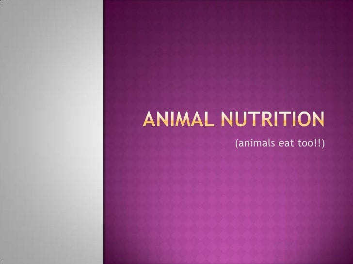 Animal nutrition<br />(animals eat too!!)<br />