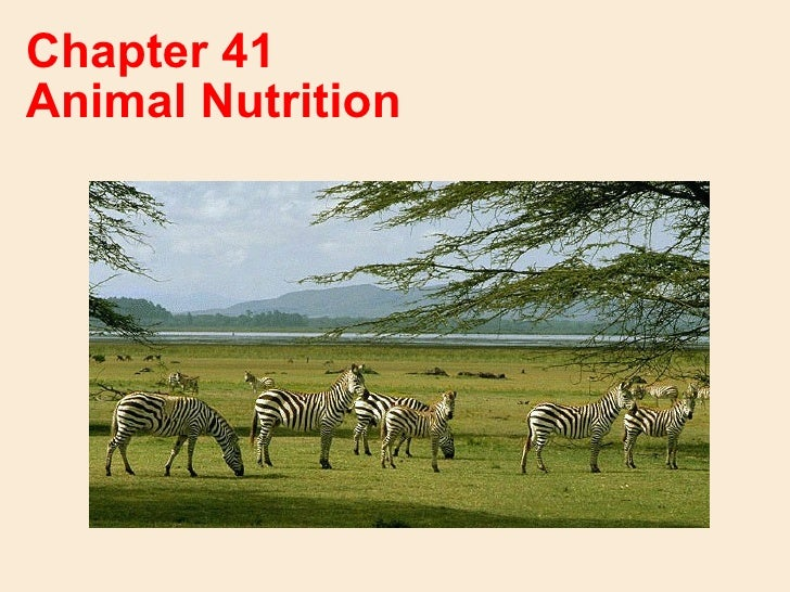 Chapter 41Animal Nutrition