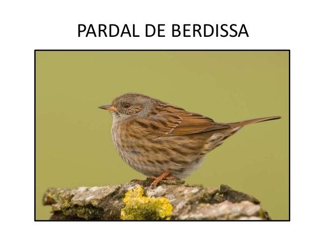 PARDAL DE BERDISSA