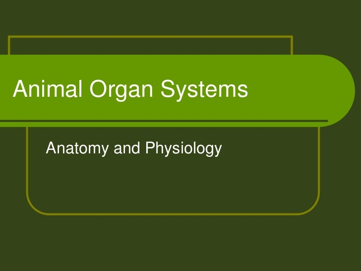 Animal Organ Systems  Anatomy and Physiology