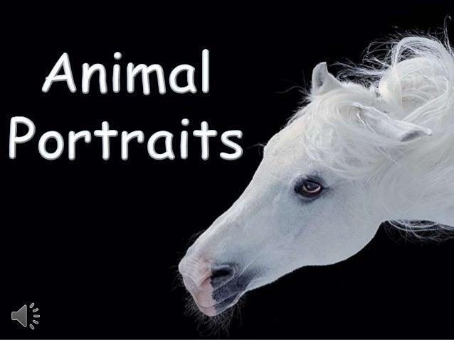 Animal portraits (v.m.)