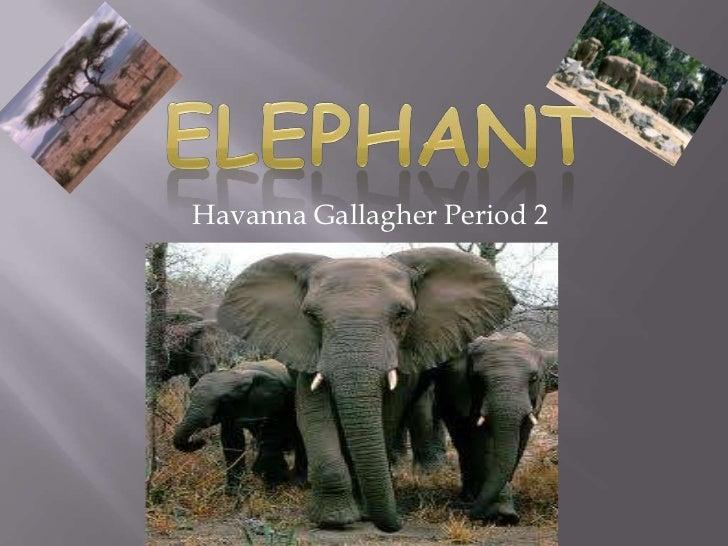 Havanna Gallagher Period 2